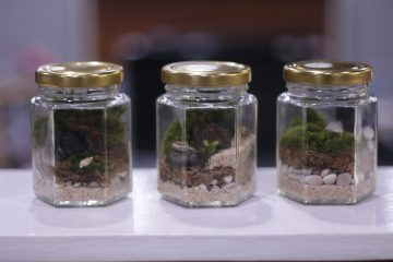 Play Saturday: Moss Terrarium