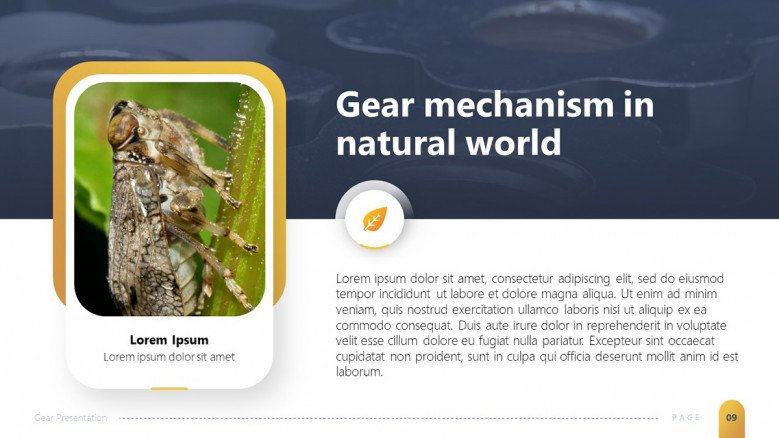 Gear mechanism in nature