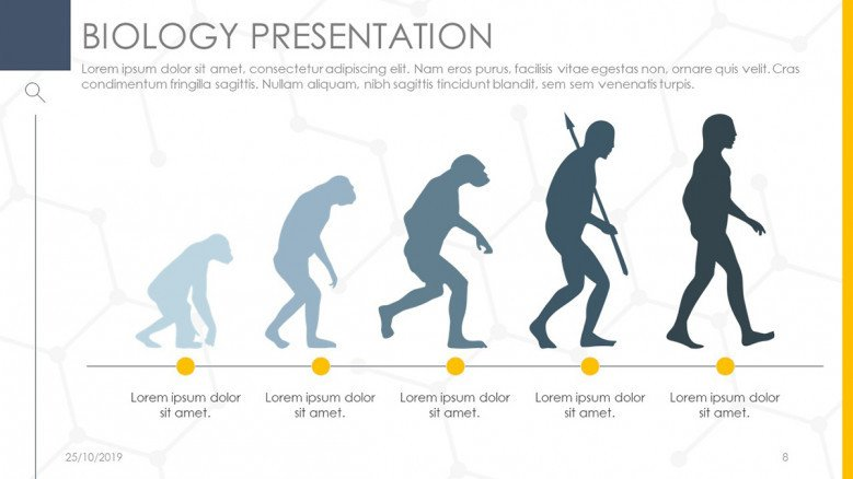 Infographic Human Evolution Timeline